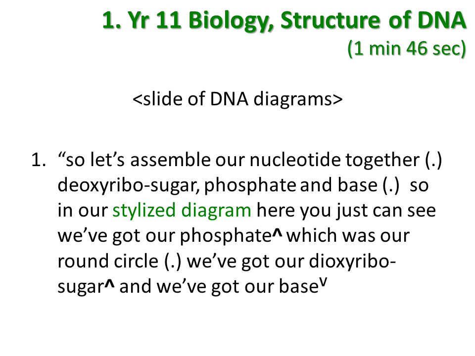 """1. Yr 11 Biology, Structure of DNA (1 min 46 sec) 1.""""so let's assemble our nucleotide together (.) deoxyribo-sugar, phosphate and base (.) so in our s"""