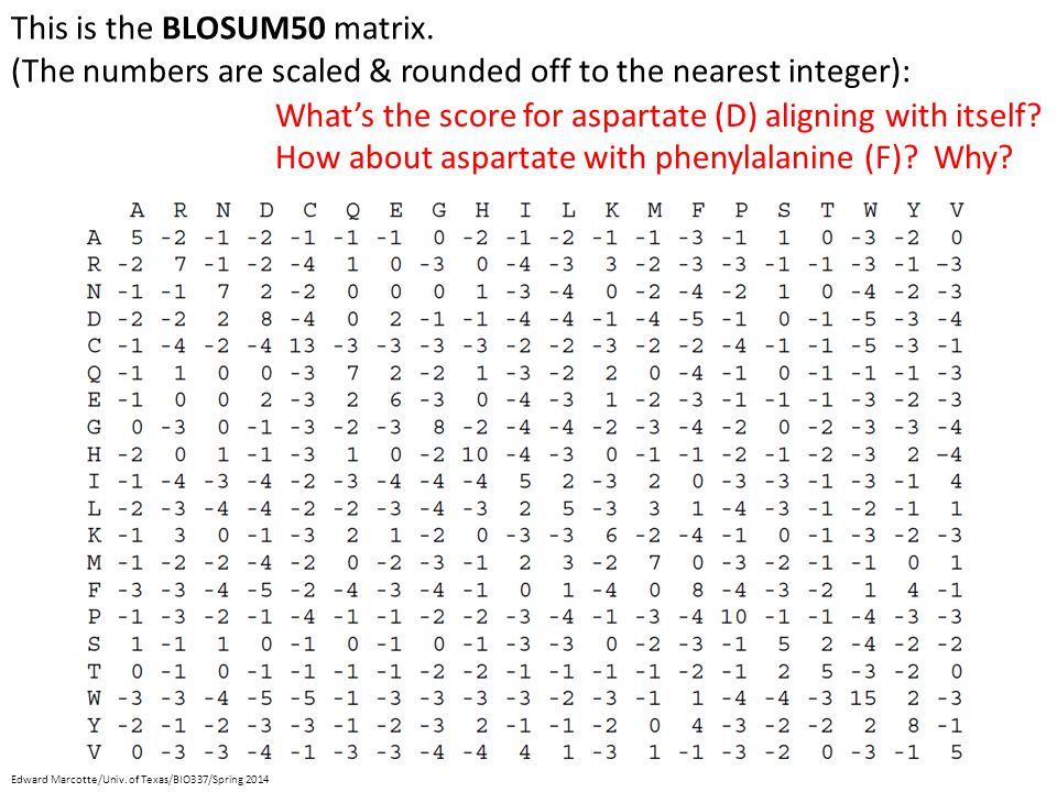 This is the BLOSUM50 matrix.