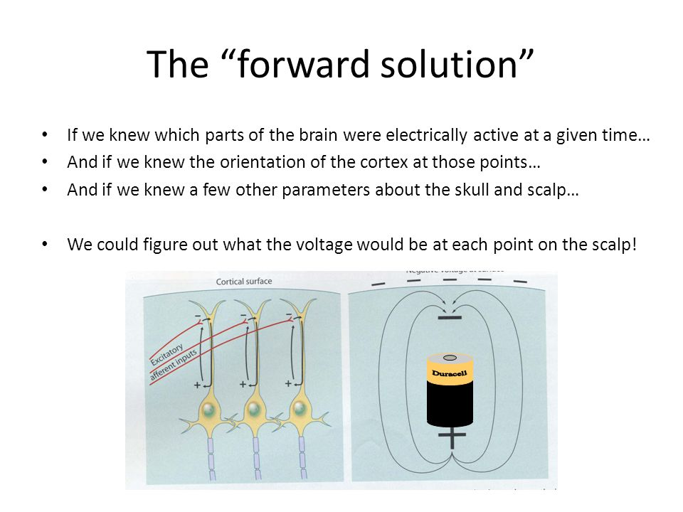 """The """"forward solution"""" If we knew which parts of the brain were electrically active at a given time… And if we knew the orientation of the cortex at t"""