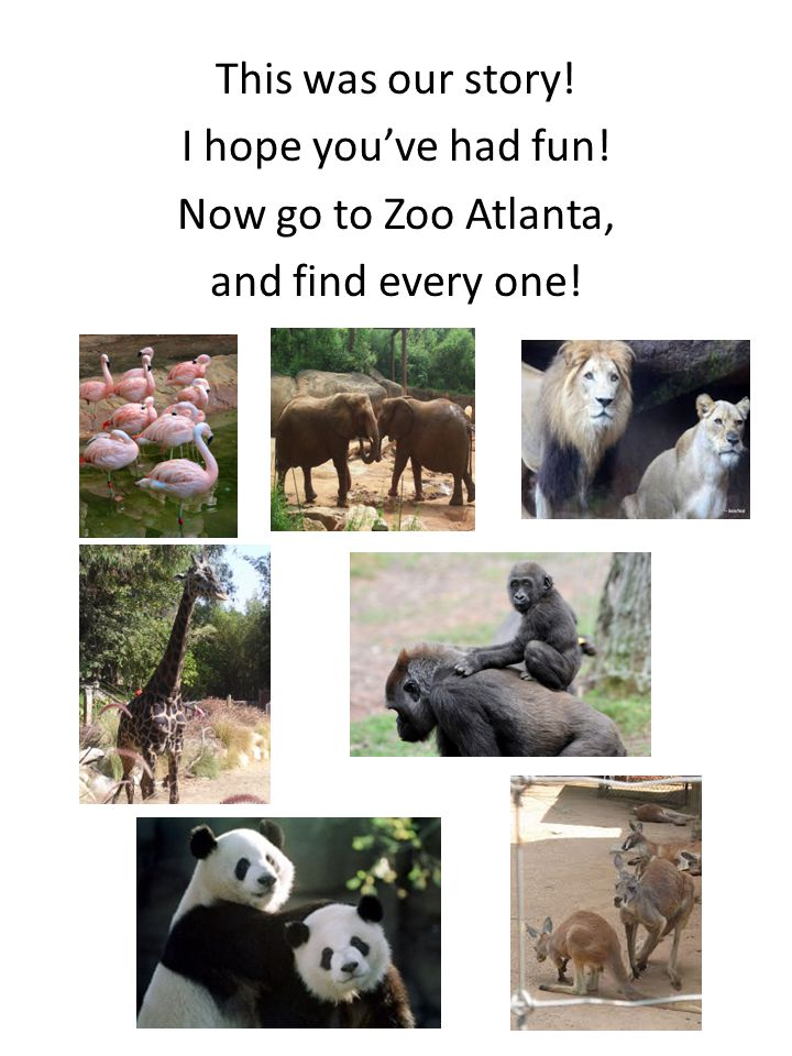 This was our story! I hope you've had fun! Now go to Zoo Atlanta, and find every one!