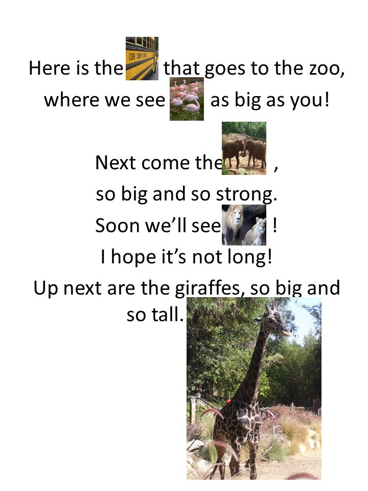 Here is the that goes to the zoo, where we see as big as you.