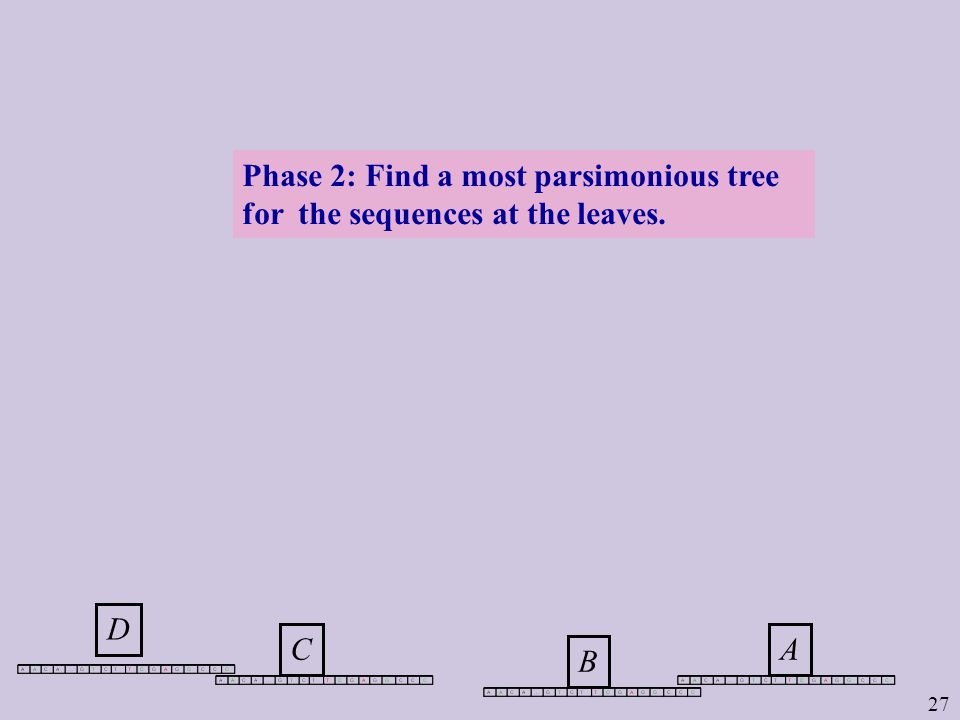 27 DCBA Phase 2: Find a most parsimonious tree for the sequences at the leaves.