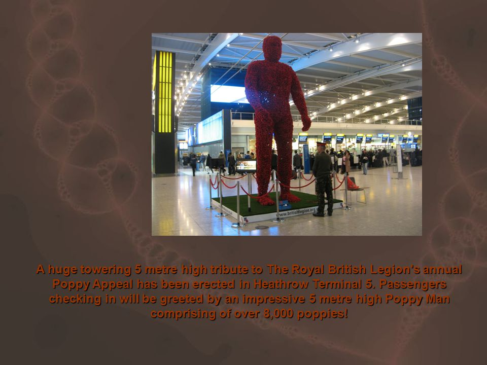 A huge towering 5 metre high tribute to The Royal British Legion s annual Poppy Appeal has been erected in Heathrow Terminal 5.
