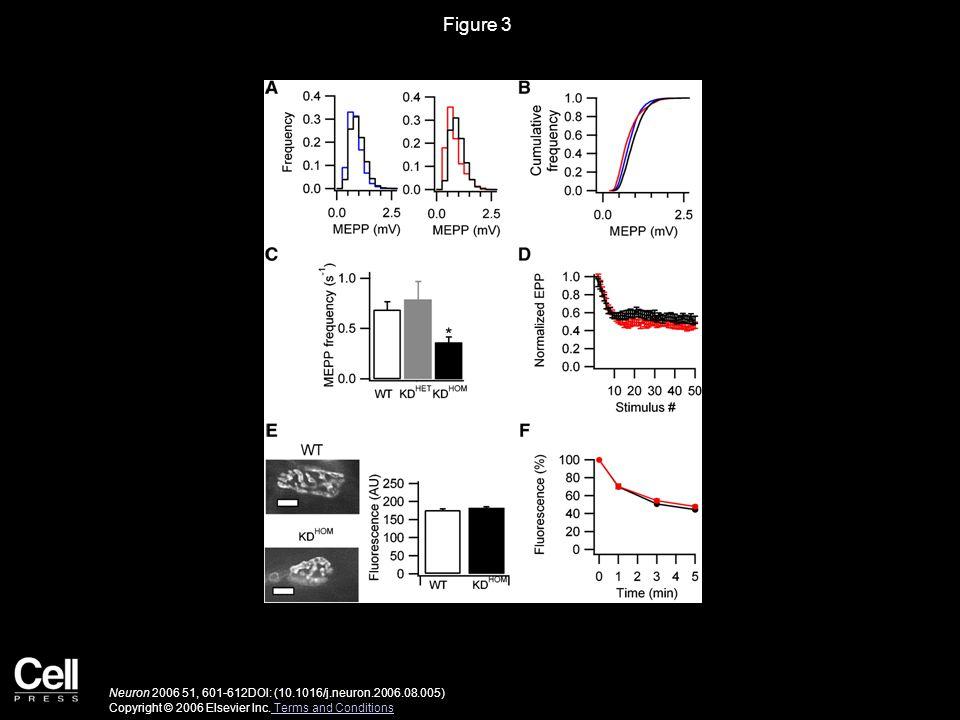 Figure 3 Neuron 2006 51, 601-612DOI: (10.1016/j.neuron.2006.08.005) Copyright © 2006 Elsevier Inc.
