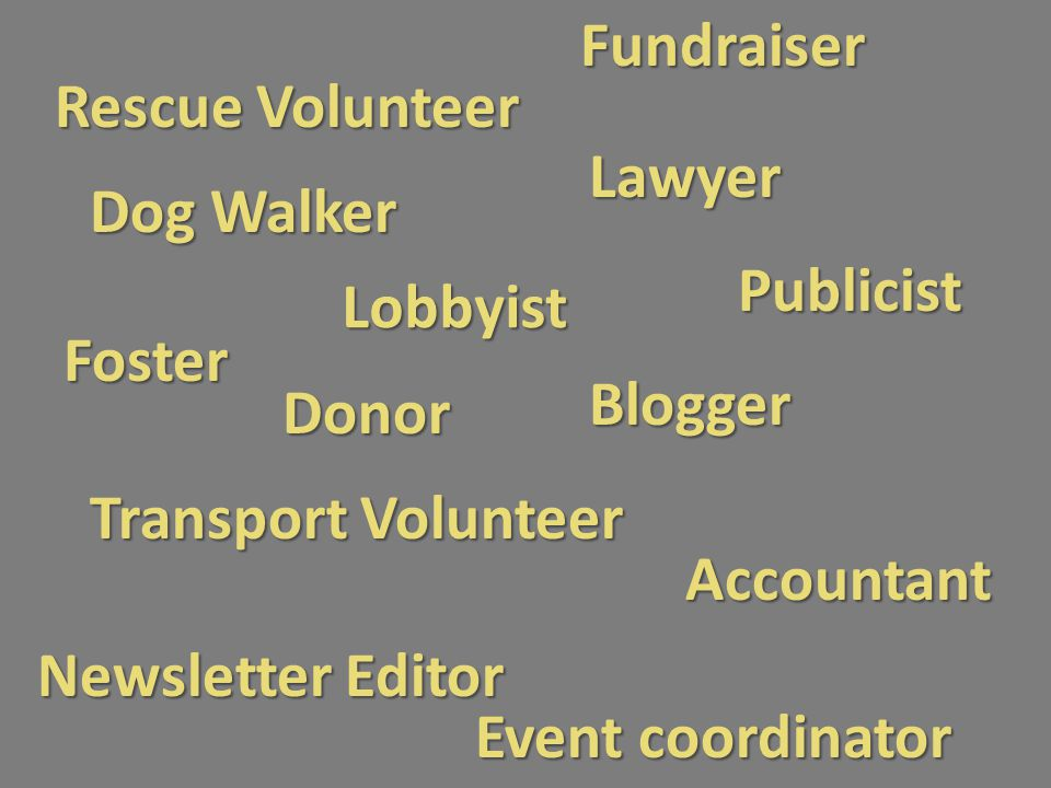 Fundraiser Rescue Volunteer Publicist Transport Volunteer Lobbyist Blogger Foster Accountant Lawyer Donor Event coordinator Newsletter Editor Dog Walk