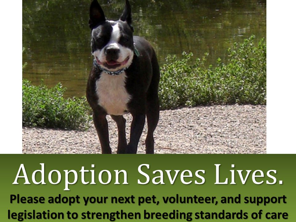 Adoption Saves Lives. Please adopt your next pet, volunteer, and support legislation to strengthen breeding standards of care Adoption Saves Lives. Pl