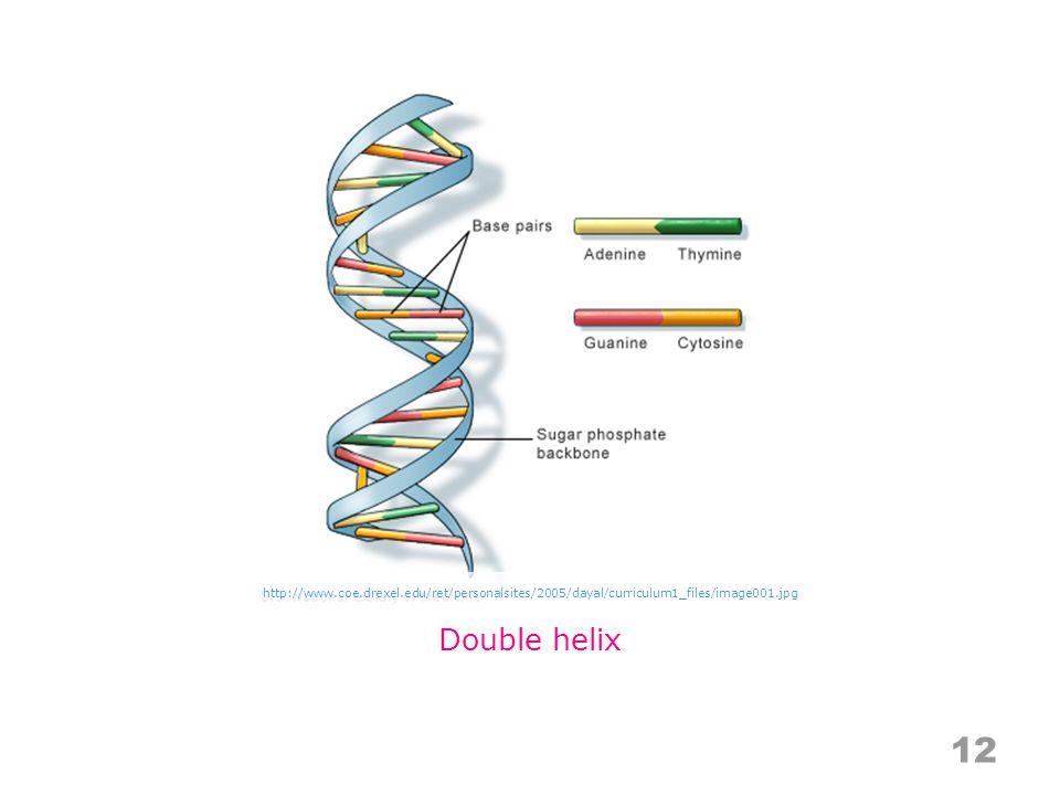 12 Double helix http://www.coe.drexel.edu/ret/personalsites/2005/dayal/curriculum1_files/image001.jpg