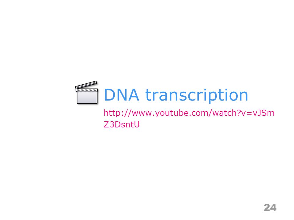 DNA transcription 24 http://www.youtube.com/watch v=vJSm Z3DsntU