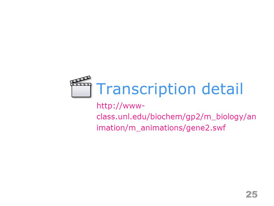 Transcription detail 25 http://www- class.unl.edu/biochem/gp2/m_biology/an imation/m_animations/gene2.swf