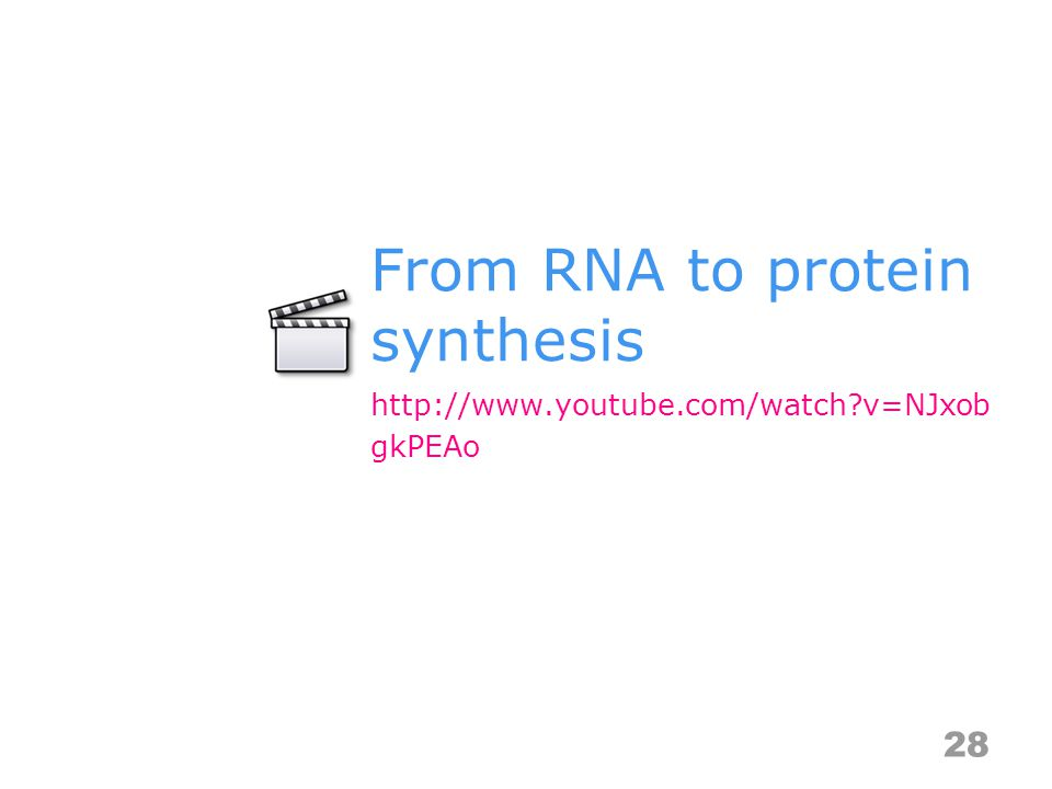From RNA to protein synthesis 28 http://www.youtube.com/watch v=NJxob gkPEAo