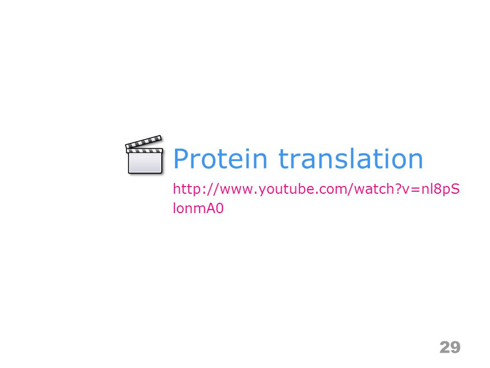 Protein translation 29 http://www.youtube.com/watch v=nl8pS lonmA0
