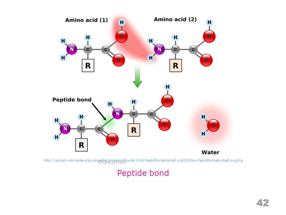 42 Peptide bond http://upload.wikimedia.org/wikipedia/commons/thumb/6/6d/Peptidformationball.svg/2000px-Peptidformationball.svg.png