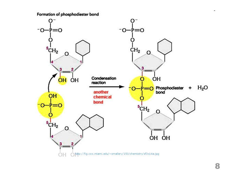 8 http://fig.cox.miami.edu/~cmallery/150/chemistry/sf3x14a.jpg