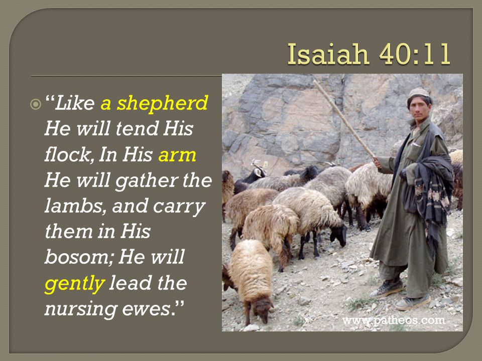  Like a shepherd He will tend His flock, In His arm He will gather the lambs, and carry them in His bosom; He will gently lead the nursing ewes. www.patheos.com