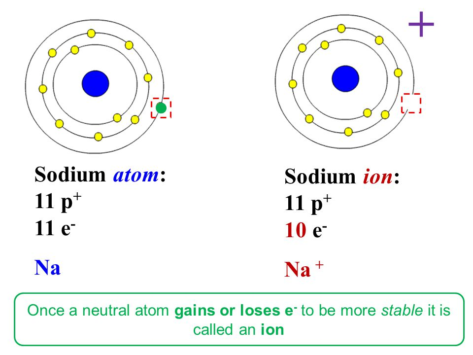 Sodium atom: 11 p + 11 e - Na Sodium ion: 11 p + 10 e - Na + + Once a neutral atom gains or loses e - to be more stable it is called an ion