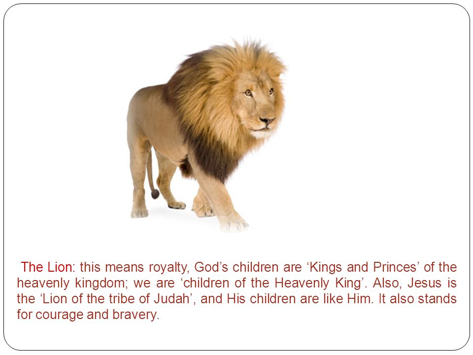The Lion: this means royalty, God's children are 'Kings and Princes' of the heavenly kingdom; we are 'children of the Heavenly King'. Also, Jesus is t
