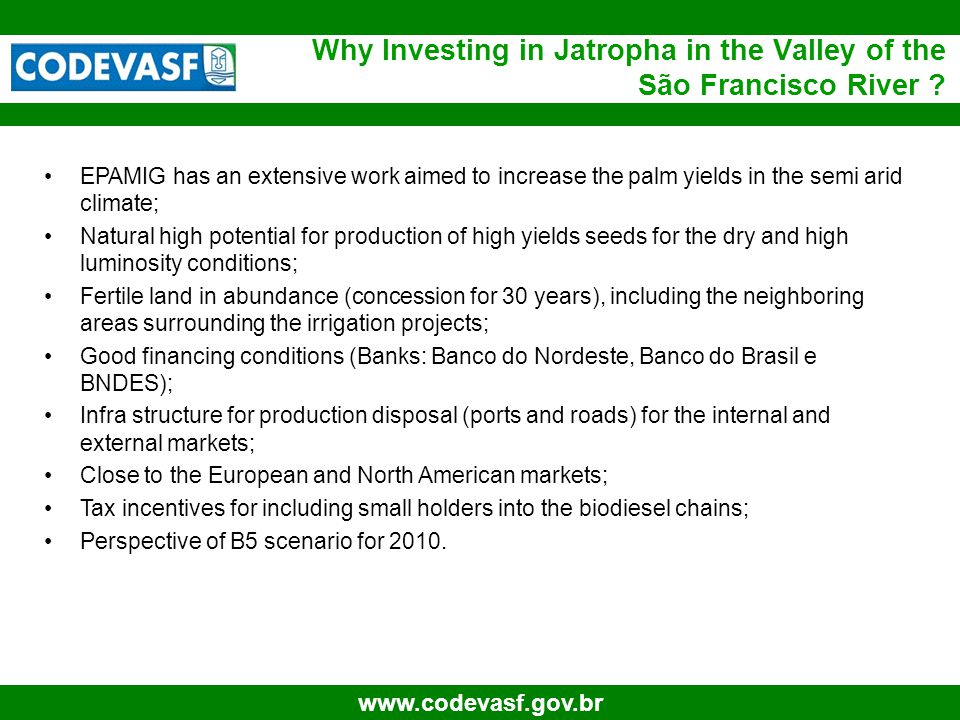 45 www.codevasf.gov.br Why Investing in Jatropha in the Valley of the São Francisco River ? EPAMIG has an extensive work aimed to increase the palm yi