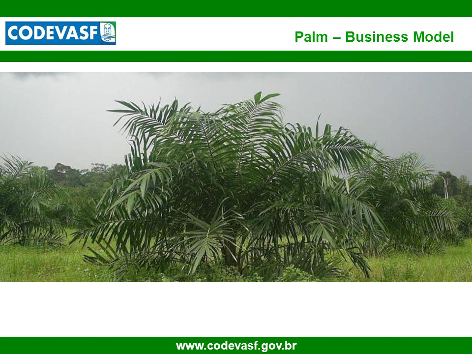 8 www.codevasf.gov.br EMBRAPA has an extensive work aimed to increase the palm yields in the semi arid climate; Natural high potential for production of high yields seeds for the dry and high luminosity conditions; Fertile land in abundance (concession for 30 years), including the neighboring areas surrounding the irrigation projects; Good financing conditions (Banks: Banco do Nordeste, Banco do Brasil e BNDES); Infra-structure for production disposal (ports and roads) for the internal and external markets; Close to the European and North American markets; Tax incentives for including small holders into the biodiesel chains Perspective of B5 scenario already for 2010.