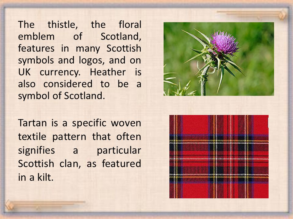 The thistle, the floral emblem of Scotland, features in many Scottish symbols and logos, and on UK currency.