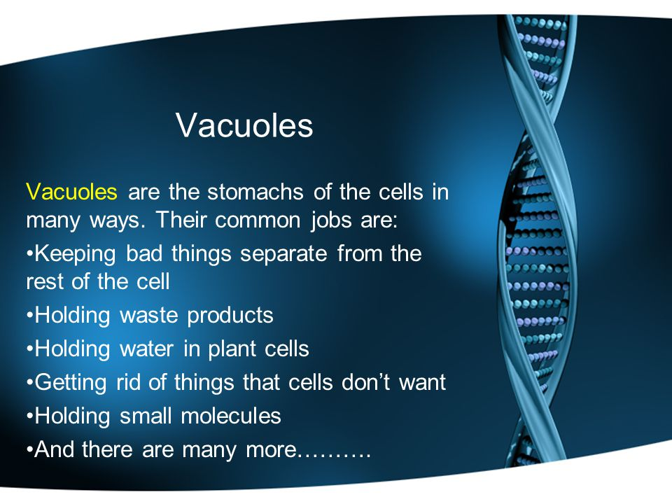 Vacuoles Vacuoles are the stomachs of the cells in many ways.