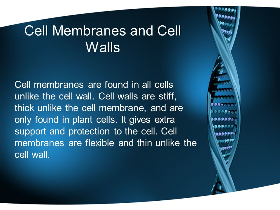Cell Membranes and Cell Walls Cell membranes are found in all cells unlike the cell wall.