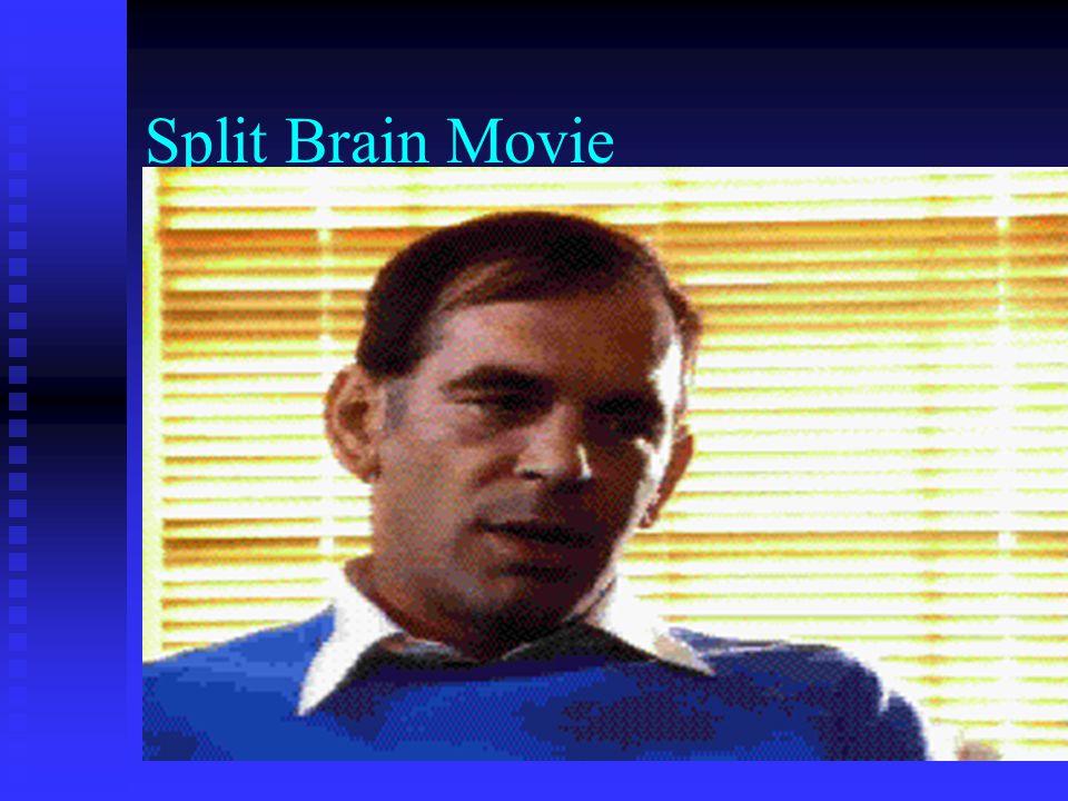Split Brain Movie