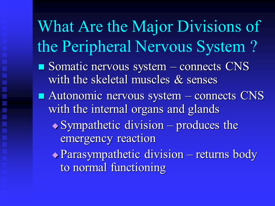 What Are the Major Divisions of the Peripheral Nervous System .