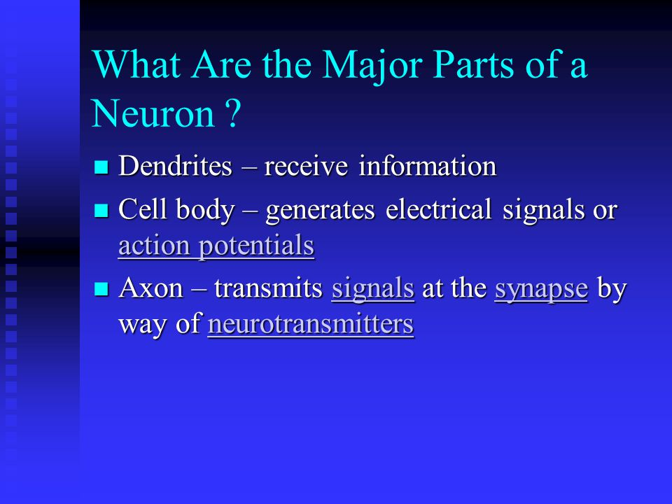 What Are the Major Parts of a Neuron .