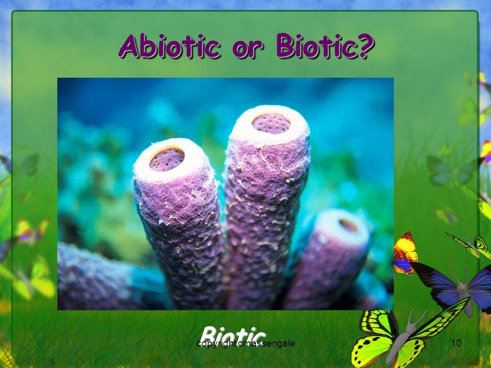 10 Abiotic or Biotic? Biotic copyright cmassengale