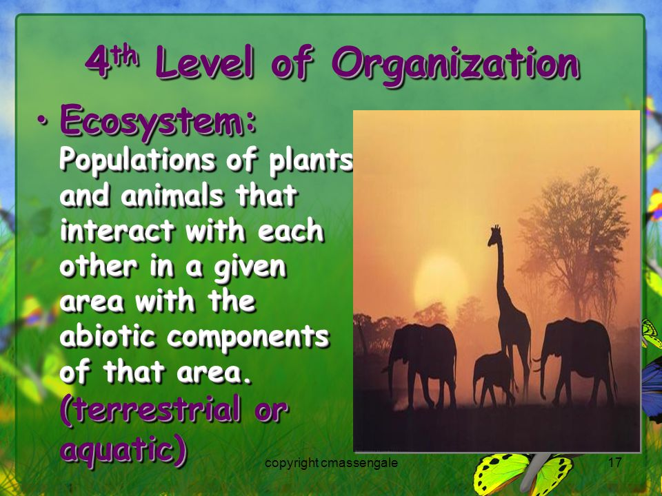 17 4 th Level of Organization Ecosystem: Populations of plants and animals that interact with each other in a given area with the abiotic components of that area.