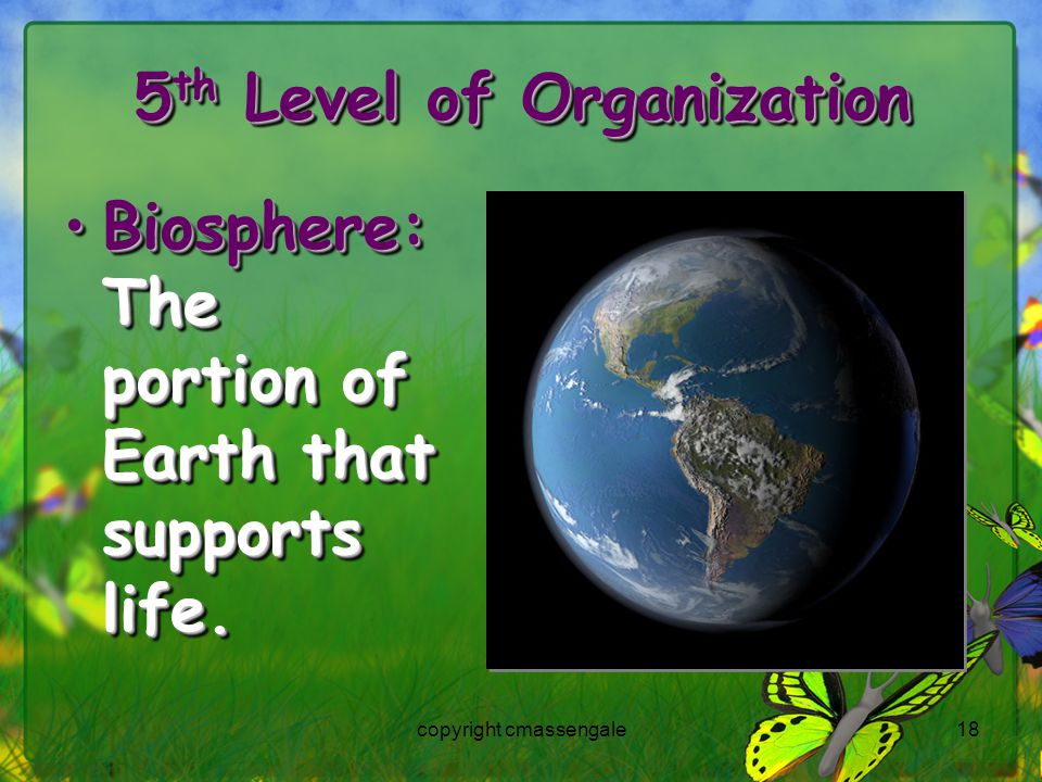18 5 th Level of Organization Biosphere: The portion of Earth that supports life.Biosphere: The portion of Earth that supports life.