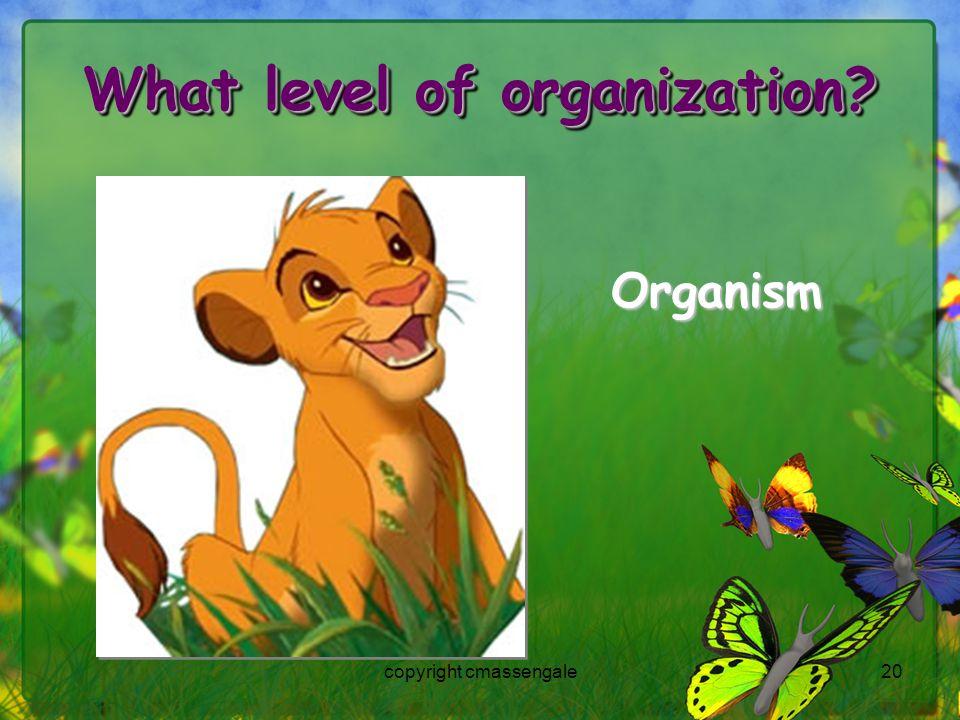 20 What level of organization? Organism copyright cmassengale