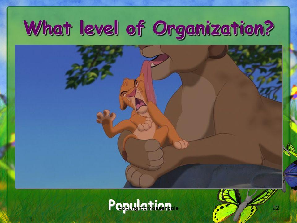 22 What level of Organization? Population copyright cmassengale