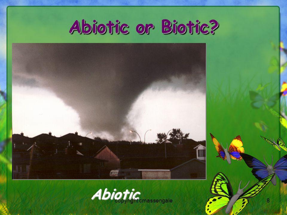8 Abiotic or Biotic? Abiotic copyright cmassengale