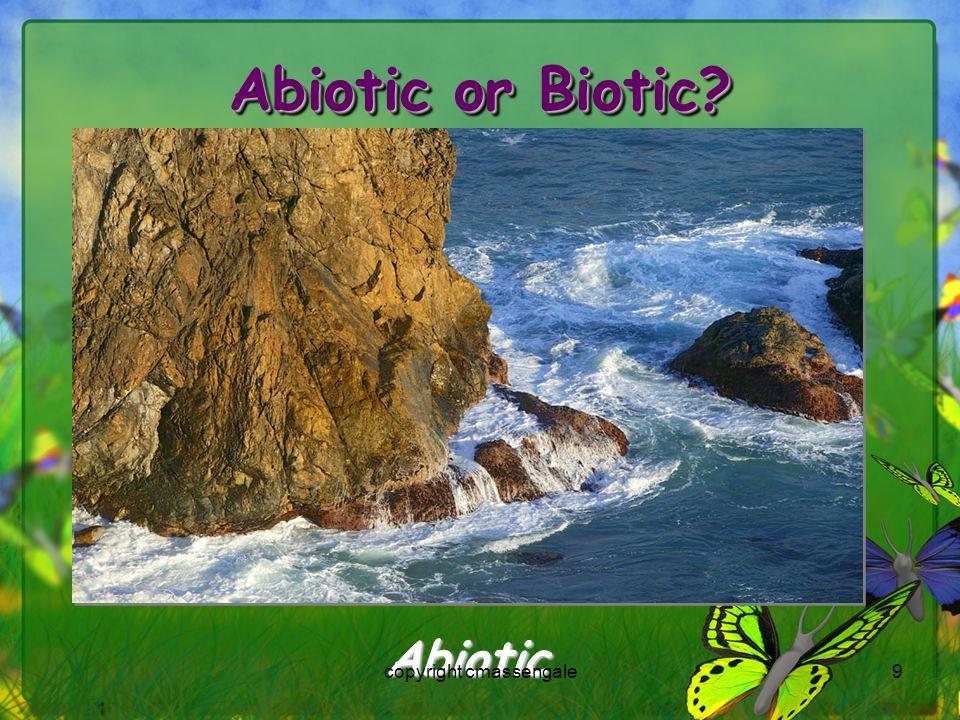 9 Abiotic or Biotic? Abiotic copyright cmassengale