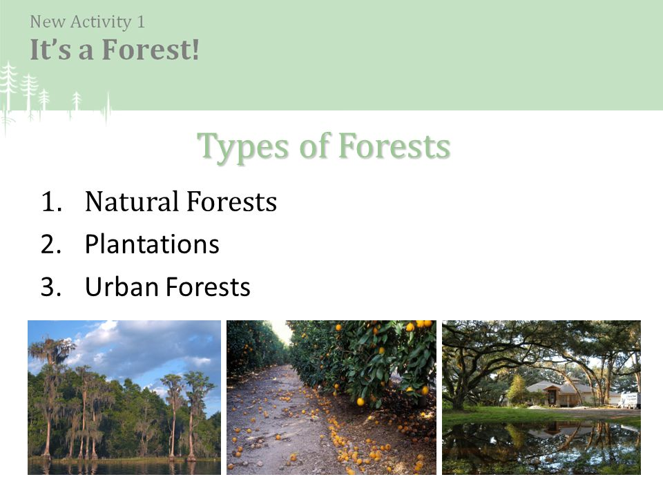 1.Natural Forests 2.Plantations 3.Urban Forests Types of Forests