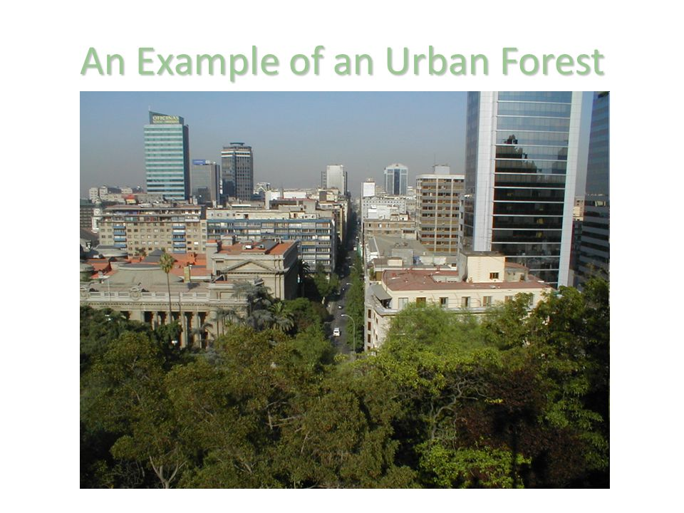 An Example of an Urban Forest