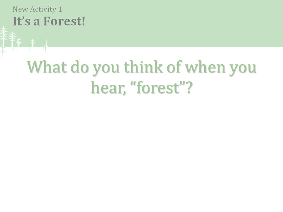 What do you think of when you hear, forest ?