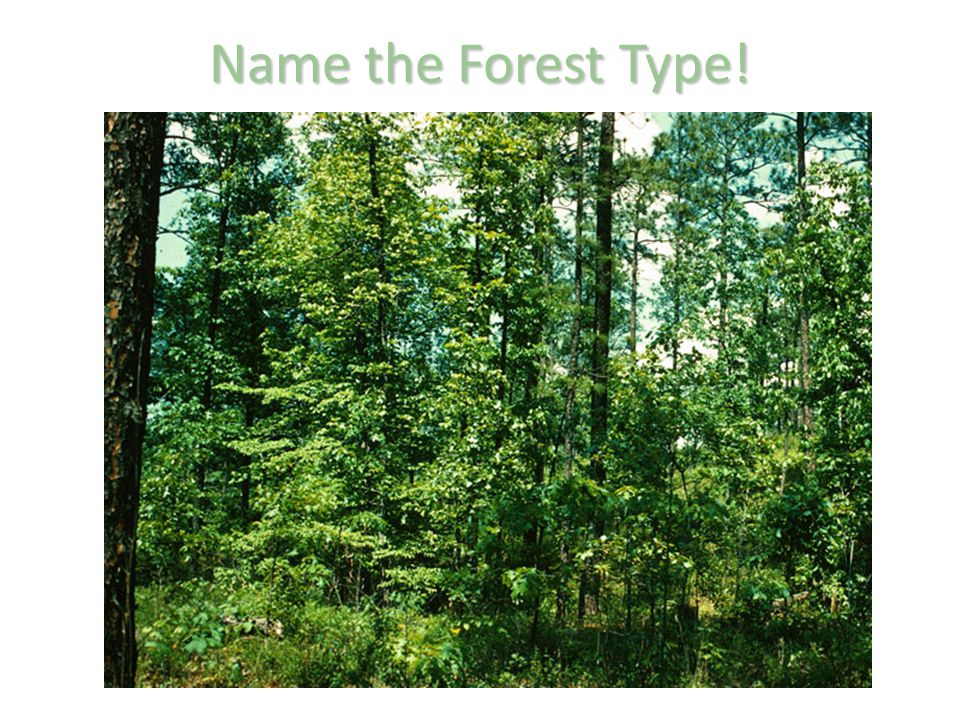 Name the Forest Type!