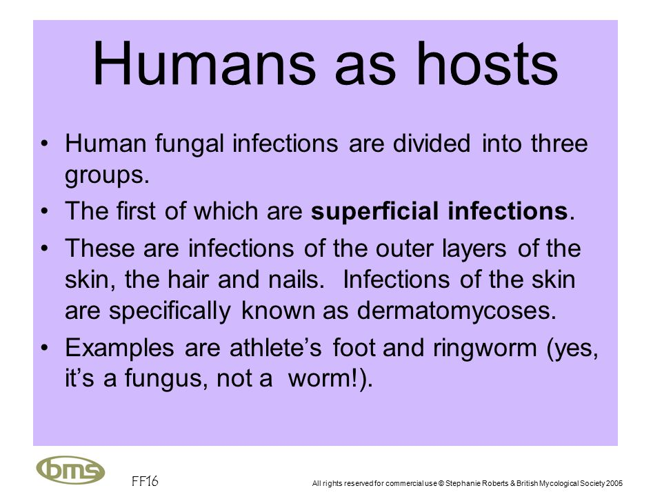 FF16 All rights reserved for commercial use © Stephanie Roberts & British Mycological Society 2005 Humans as hosts Human fungal infections are divided into three groups.