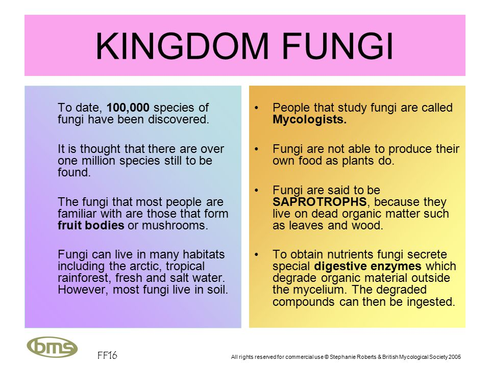 FF16 All rights reserved for commercial use © Stephanie Roberts & British Mycological Society 2005 KINGDOM FUNGI To date, 100,000 species of fungi have been discovered.