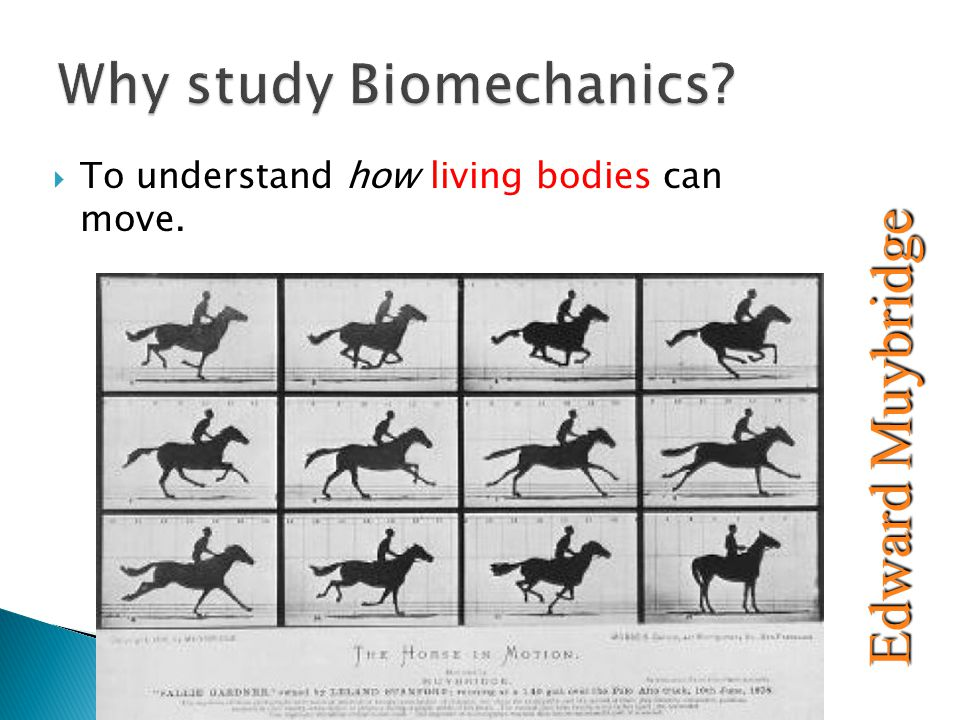  To understand how living bodies can move. Edward Muybridge