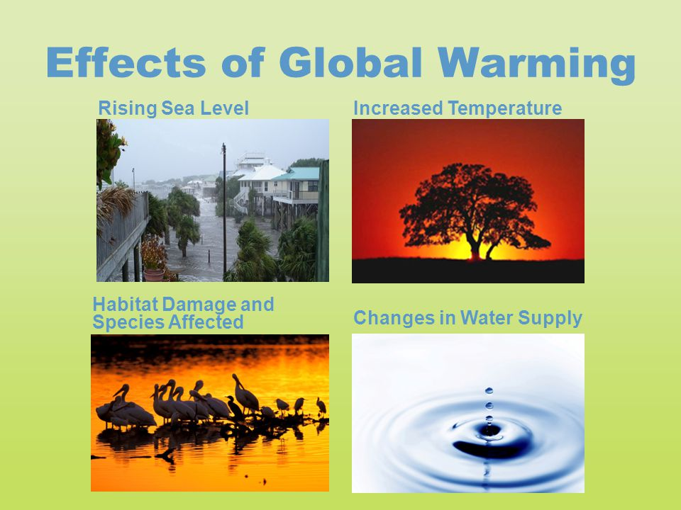 Effects of Global Warming Increased Temperature Habitat Damage and Species Affected Changes in Water Supply Rising Sea Level
