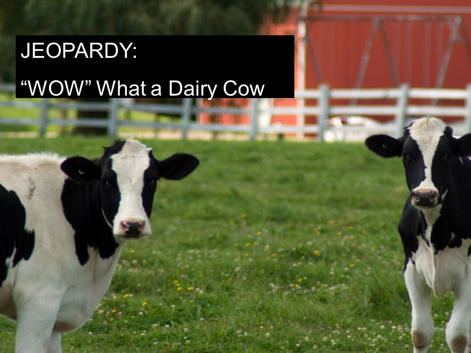 Jeopardy Style Wow! What A Cow! JEOPARDY: WOW What a Dairy Cow