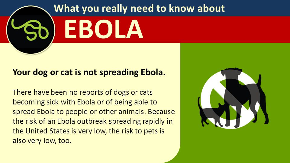 What you really need to know about EBOLA Your dog or cat is not spreading Ebola.