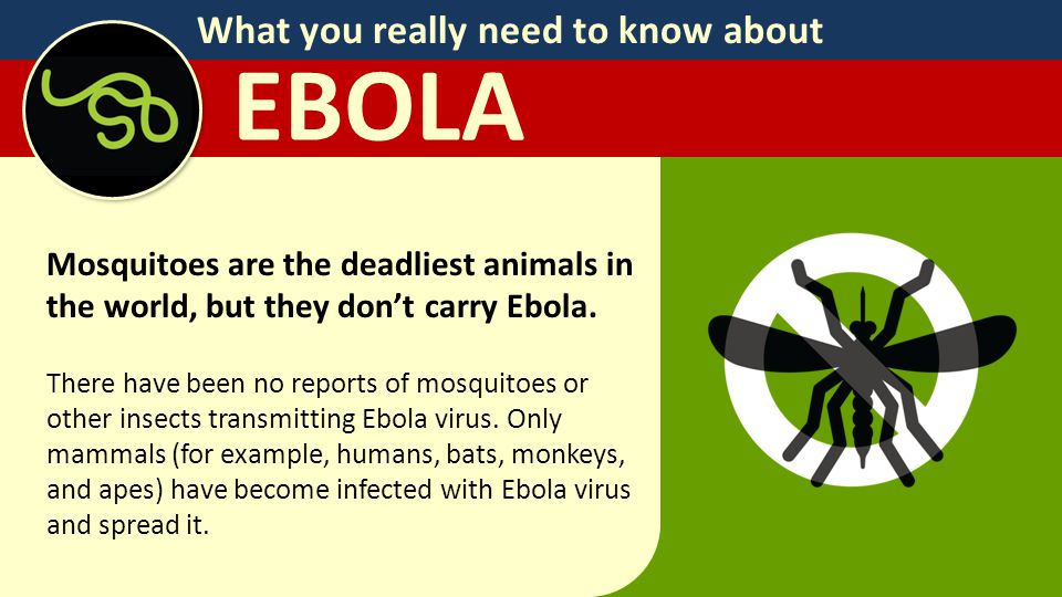 What you really need to know about EBOLA Mosquitoes are the deadliest animals in the world, but they don't carry Ebola.