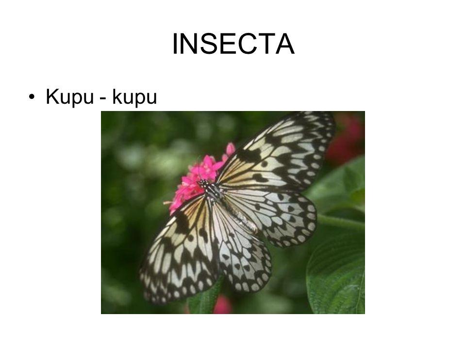 ARACHNIDA Tarantula