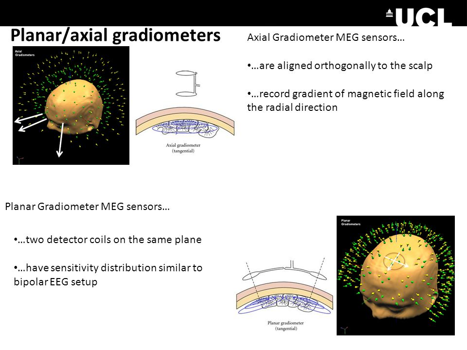 Planar/axial gradiometers Axial Gradiometer MEG sensors… …are aligned orthogonally to the scalp …record gradient of magnetic field along the radial direction Planar Gradiometer MEG sensors… …two detector coils on the same plane …have sensitivity distribution similar to bipolar EEG setup