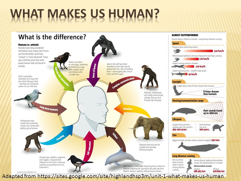  What does being human mean to you. What distinguishes humans from animals.