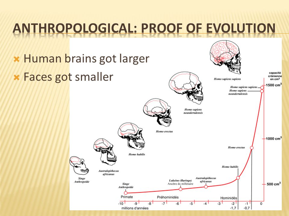  Human brains got larger  Faces got smaller